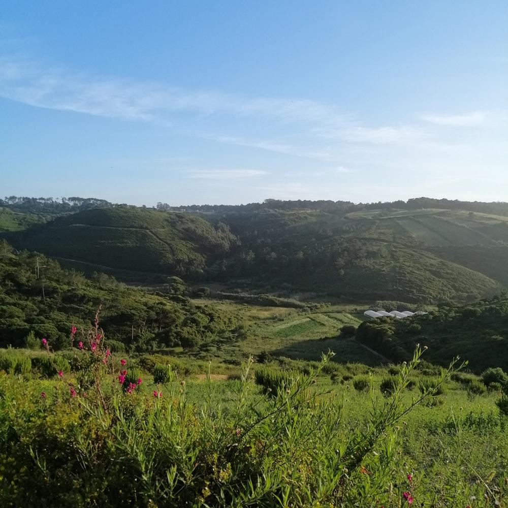 Vale do Rio Falcao